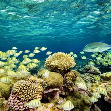 Protecting Our Marine National Monuments: An Evening of Hidden Beauty