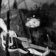 Rin Tin Tiger + The She's + Piranha Party