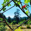Lotus Feed Farm image