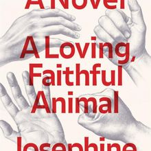 "Josephine Rowe reads from ""A Loving, Faithful Animal"""