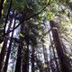 Muir Woods Coastal Redwoods 1/2 Day Tour