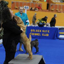 2018 Golden Gate Kennel Club Dog Show
