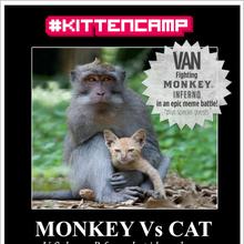 #KittenCamp