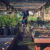 Mount Sutro Open Space - Native Plant Nursery image