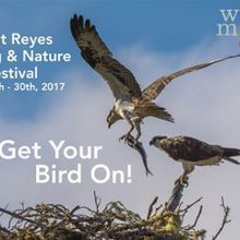 Point Reyes Birding and Nature Festival