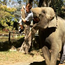 Meet, Greet, and Feed Elephants!
