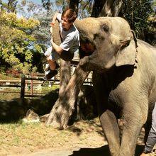 Meet, Greet, and Feed Elephants!
