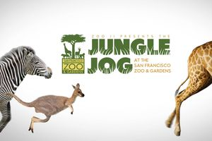 Jungle Jog - A race through...