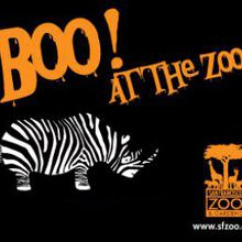 Boo at the San Francisco Zoo