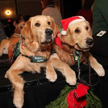 FESTIVE HOLIDAY LUNCHEON? IS A TICKET TO A PAWSOME HOLIDAY