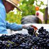 Schug Carneros Estate Winery image