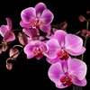 Beautiful Orchids image