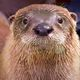 "Grand Opening - ""Otters: Watershed Ambassadors"""