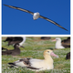 Science Sundays: The Albatrosses of Midway