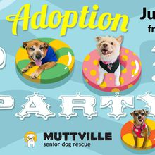 Muttville Senior Dog Rescue Adopt-a-thon Pool Party!
