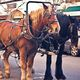 Victorian Carriage Rides