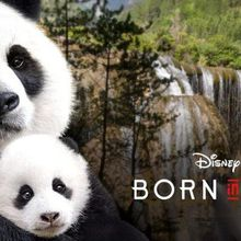 Zoovie Night: Disneynature - Born in China