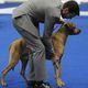 2019 Golden Gate Kennel Club dog show