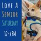 Meet amazing older dogs at Muttville this weekend!
