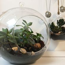 Jumbo Terrarium Workshops at Cole Valley!