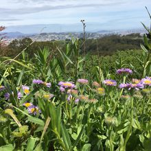 Exploring San Bruno Mountain's Saddle and Bog Trails