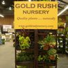 Gold Rush Nursery image