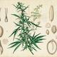 The Science of Cannabis: The Neuroscience of Cannabis