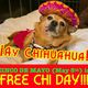 Ay Chihuahua! Free adoptions for Cinco de Mayo! No fees for the Chis!