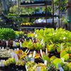 Sloat Garden Center - Pleasant Hill image