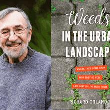 RICHARD ORLANDO at Books Inc. Berkeley