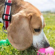 9th Annual Wag Hotels Easter Egg Hunt for Dogs