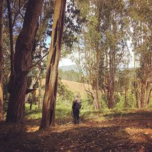 Forest Bathing with Hana Lee Goldin