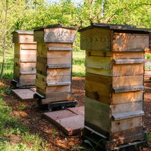 Introduction to Natural Beekeeping with the Warre Hive