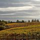 Harvest Festival Spring Mountain Wines