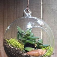 Terrarium Workshops!