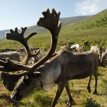 Shamans of the Reindeer Herders and Siqingua Daur Shaman