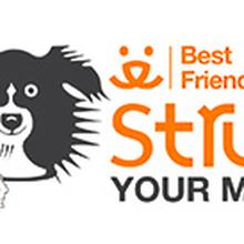 Best Friends Strut Your Mutt San Francisco