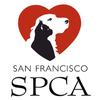 San Francisco SPCA - Pacific Heights Campus image