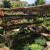Hortica Urban Gardens image