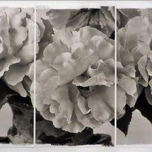 Brigitte Carnochan, Natural Beauty