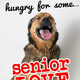 Love a Senior Sunday @ Muttville Senior Dog Rescue!