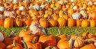 9 SF Bay Area Pumpkin Patches & Haunted Houses to Hit this Halloween