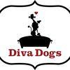 Diva Dogs image