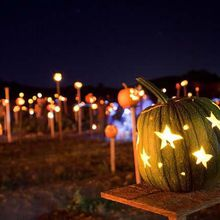 Pumpkins On Pikes