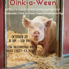 Oink-a-Ween