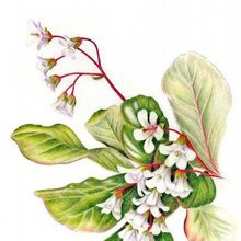 Drawing Cloud Forest Beauties in Colored Pencil with Nina Antze