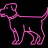 Pet Supplies Plus image