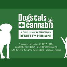 Dogs, Cats + Cannabis