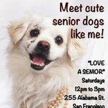 Love a Senior Saturday @ Muttville Senior Dog Rescue!