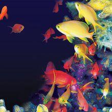 Coral Reef NightLife, Music by DJ Qbert